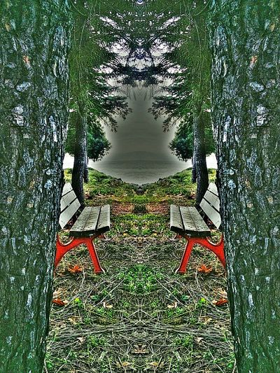Bench Horizon Green Trees Sea Follow Enjoying Life Natural Turkey Nature_collection