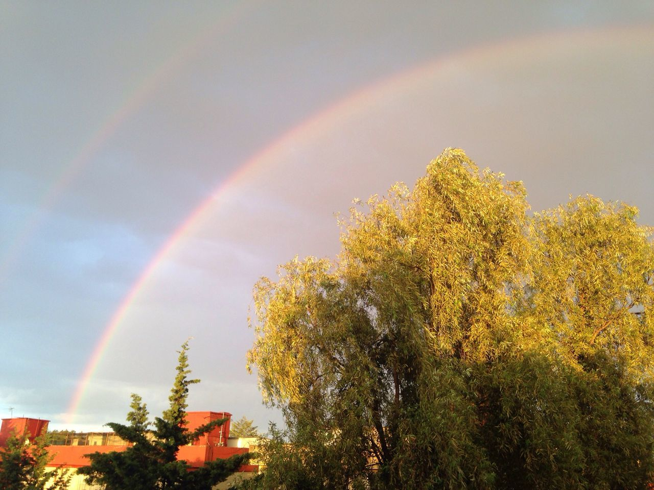 rainbow, tree, double rainbow, nature, beauty in nature, autumn, no people, multi colored, scenics, outdoors, sky, day