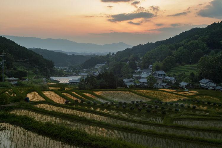 明日香村棚田2016/06/26 Asukamura Terraced rice fields Nature Sunset From My Point Of View Terraced Rice Fields Nara Japan Ultimate Japan Colour Of Life My Fevorite Place