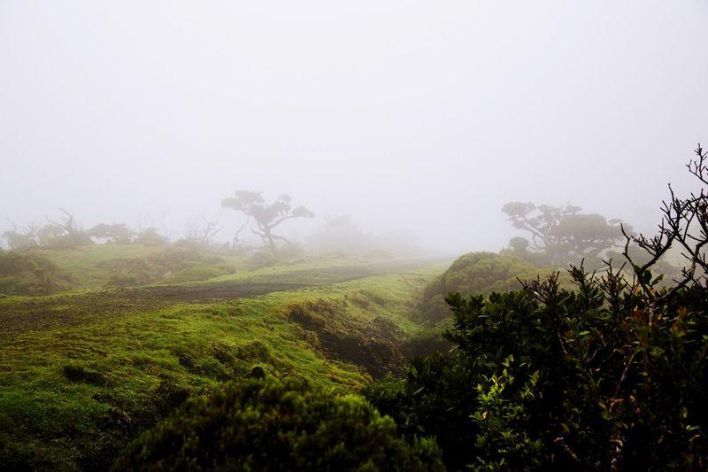 Fog Nature Tree