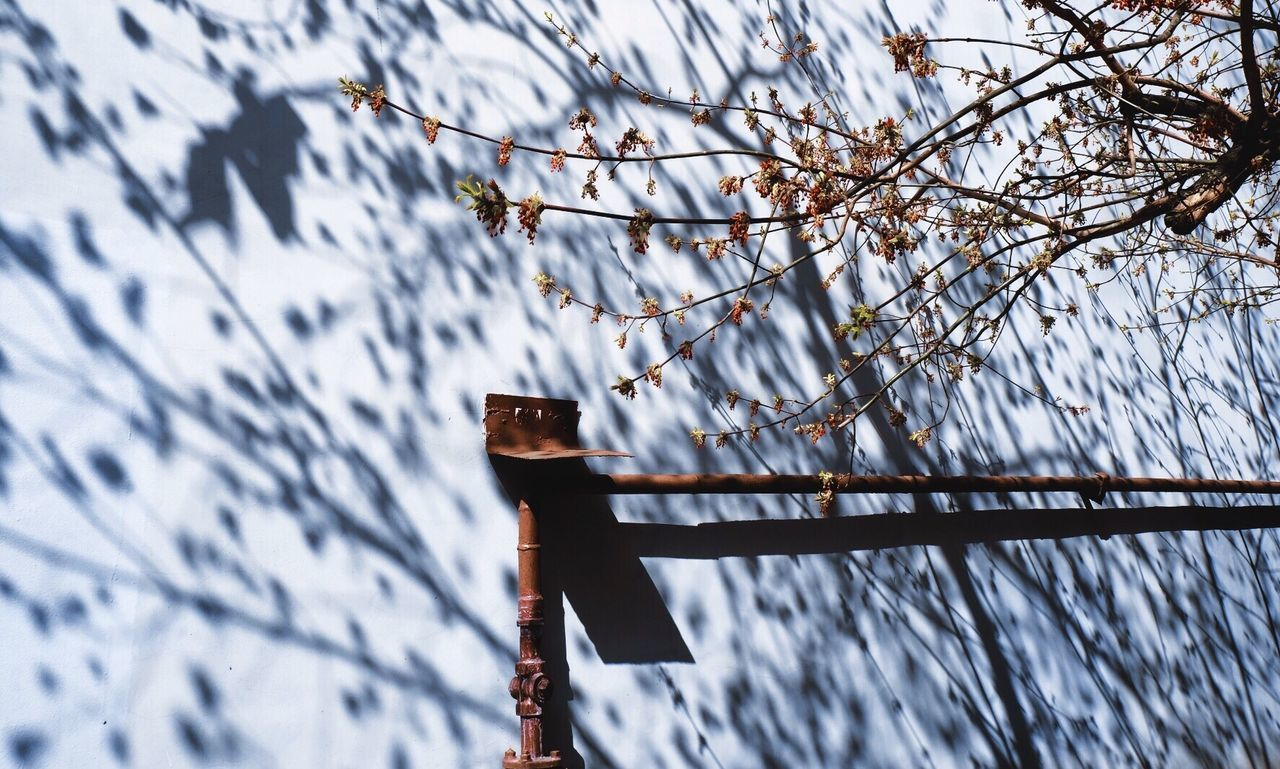 tree, branch, plant, day, no people, focus on foreground, winter, low angle view, nature, cold temperature, snow, hanging, outdoors, beauty in nature, sky, metal, security, wood - material, protection