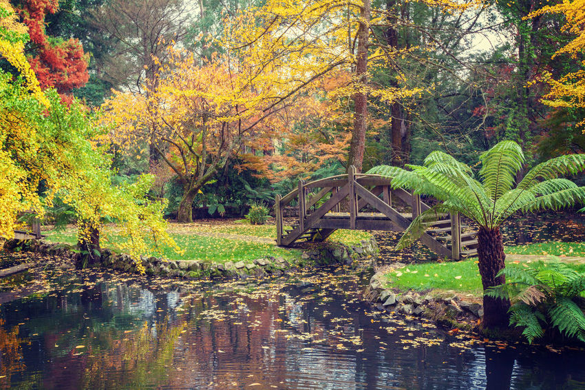 Picturesque wooden footbridge over a pond with golden trees and ferns in Autumn. Australia Autumn Alfred Nicholas Gardens Autumn Beauty In Nature Branch Day Foliage Forest Growth Lake Landscape Leaf Nature No People Outdoors Reflection Scenics Sky Tranquil Scene Tranquility Tree Water Waterfront