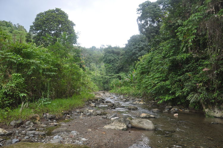 Remote River in Maitum Sarangani Province, Philippines. Composition Day Forest Green Green Color Landscape Lush Foliage Mountain Mountain Range Narrow Nature Non-urban Scene Outdoors Perspective Remote Scenics Stream Tranquil Scene Valley