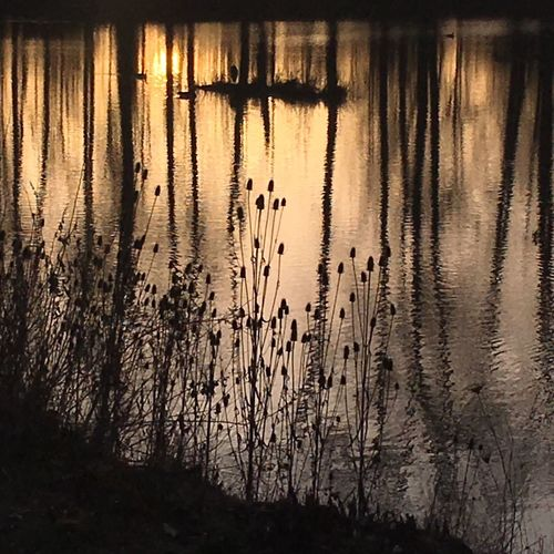 Evening light on Delta Ponds. Delta Ponds On Golden Pond EyeEm Nature Lover Showcase: February Evening Light Golden Hour Water Reflections
