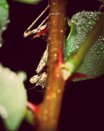 Nature Taking Photos Macro Insect Insects  Macro Photography Monster Eyes