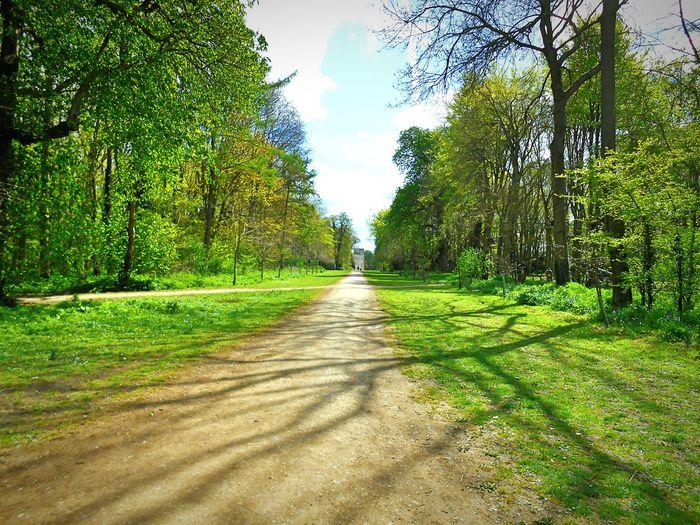 Taken by me on my Nikon S3200 yesterday. Spring Nature Trees LydiardPark Swindon Wiltshire Uk Europe 2016