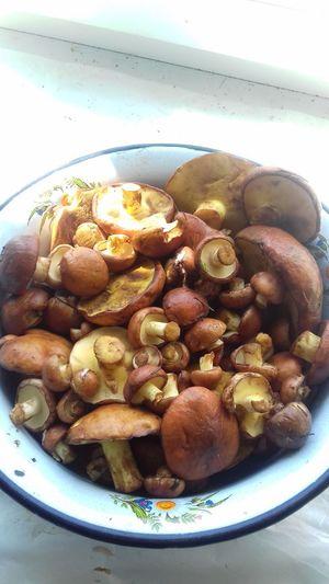 #mushrooms Mushrooms 🍄🍄 Mushrooms Mushroom Nature боровик Fungus лето грибы грибнойсезон Природа деревня маслята Appetizer Plate Bowl Close-up Food And Drink