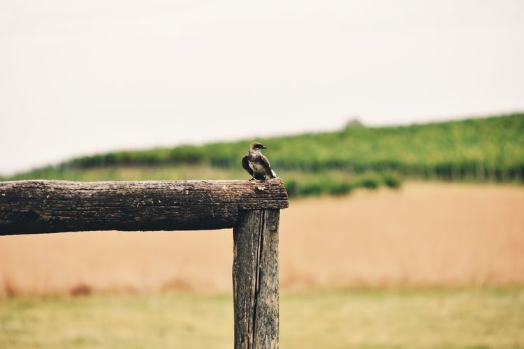 Bird perching on wooden post
