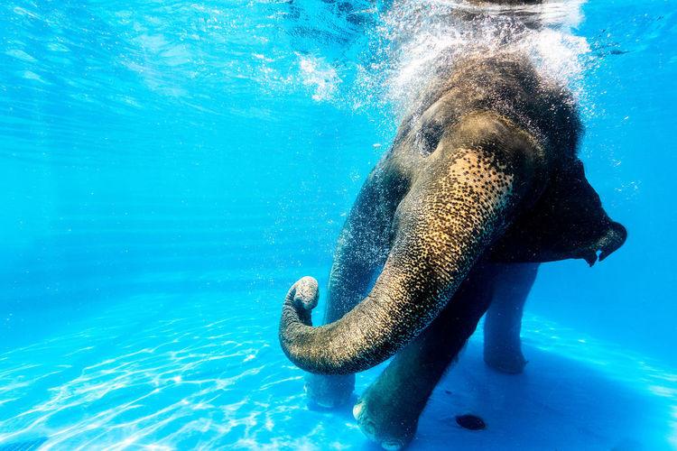swimming elephant.. Elephant Swimming Swimming Swimming Animal Animal Wildlife Elephant Elephant Art Elephant Calf Elephant Nature Park Elephant ♥ Elephants