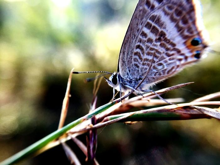 One Animal Butterfly - Insect Animal Themes Animal Wing Animals In The Wild Animal Wildlife first eyeem photo