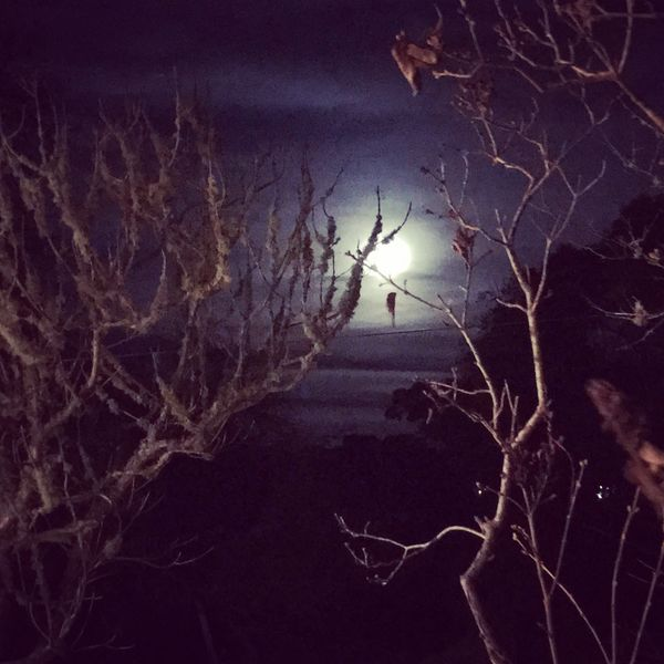 A trip away Time To Reflect No People TimeToThink Country Life Moonlight From My Point Of View Walking And Taking Pics Alonetime Moon_collection Spooky Trees Trees Beauty In Nature Bare Tree Eye4photography  EyeEm Make Love Not War Peace