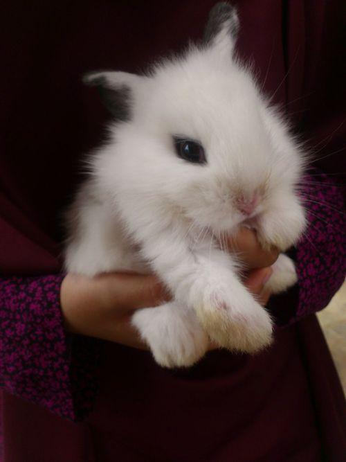 Animal Themes Close-up EyeEmNewHere Holding Mammal One Animal Pets Rabbits 🐇 Xperia Ray