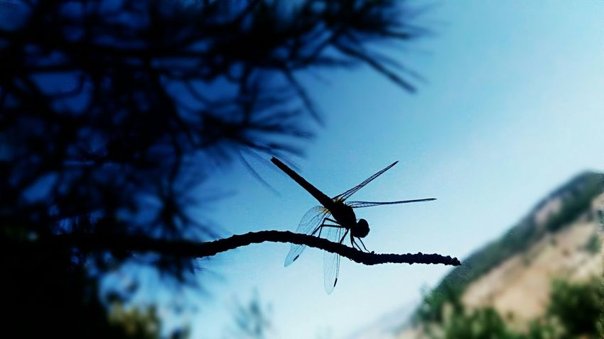 Everything has beauty but not everyone sees it Dragonfly Nature Sky Calm Mountain Libellula Tree Focus Blur Tranquility No People Insect Wild Wildlife Light And Shadow Wings Insect Photography Outdoors Beauty In Nature Country Branch Colour Of Life Silhouette Sfocatura Eyeemphoto