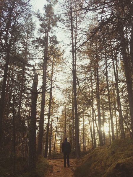 Nature Forest Outdoors Beauty In Nature People