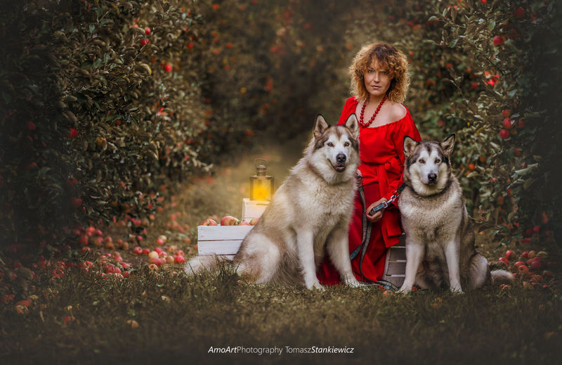 Apple orchard Alaskan Malamute Apple Canine Dog Domestic Domestic Animals Front View Full Length Hair Hairstyle Looking At Camera Mammal Nature Northen Dog One Animal One Person Orchard Outdoors Pet Owner Pets Plant Portrait Tree EyeEmNewHere