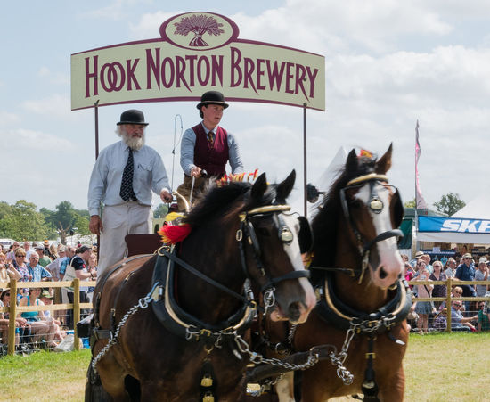 Working horses in the arena at the Countryfile Live show Brewery Bridle Horse Horse Brasses Shire Horses Working Animal