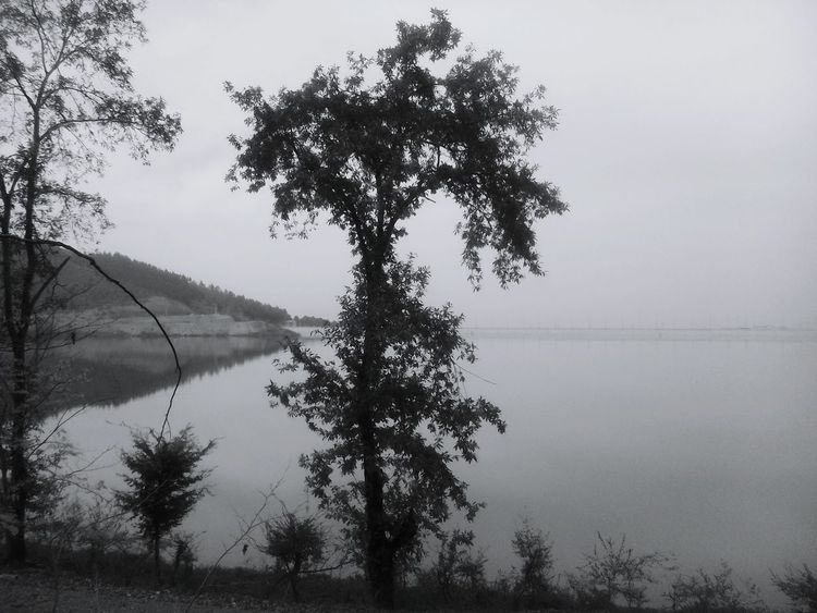 Natural Trees Arboles Black & White Blackandwhite EyeEm Best Shots Kianush Vintage Sound Of Life