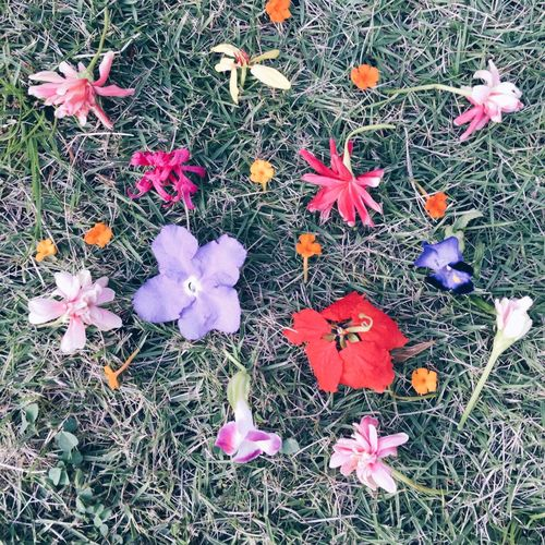 Flower mix Flower Petal Beauty In Nature Nature Growth Fragility High Angle View No People Blooming Outdoors