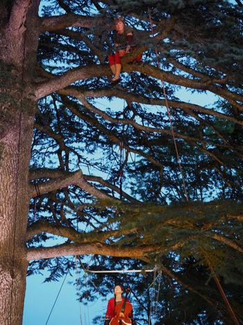 """Représentation du spectacle """"vieille branche"""" par la compagnie Prune le 21/05 dans le cèdre du château de frontenay (39). (dans le cadre de """"la semaine branchée"""" organisée par le colombier des arts) Performing representation """"vieille branche"""" by the company Prune in the Castle of Frontenay's cedar (39). (As part of """"semaine branchée"""" organized by Colombier des Arts) Arbre Climbing Trees Colombier Des Arts Compagnie Prune Contes Frontenay Haute Seille Magic Performing Artists Performing Arts Pics Et Perches Show Spectacle Theatre Théâtre De Rue Trees Vieille Branche"""