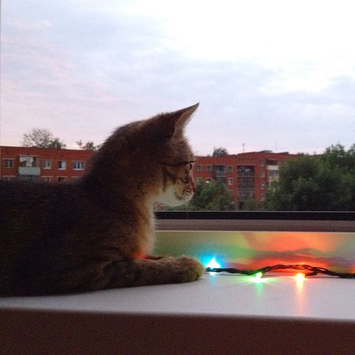 Трехчасовой утренний кот 🐾🐰🌇🎨⭐️😌 Мотя