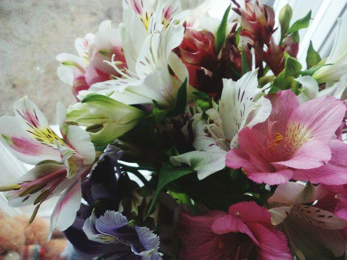 Цветы - это очень красивый подарок, для любой девушки. flowers First Eyeem Photo