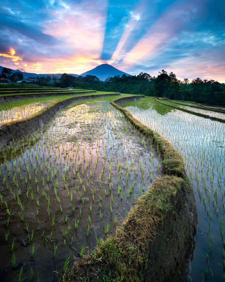 magnificent rays of light Rays Of Light Mountain Paddy Field Terrain Landscape Landscape_photography INDONESIA My Best Photo EyeEm Best Shots EyeEmNewHere EyeEm Gallery EyeEm Nature Lover Skyscraper Mountain Peak Golden Hour Dramatic Sky Sunrise High Lands Water Tree Sky Landscape Cloud - Sky Rice Paddy Plantation Cultivated Land Terraced Field Rice - Cereal Plant Storm Cloud Agriculture Crop  Farm