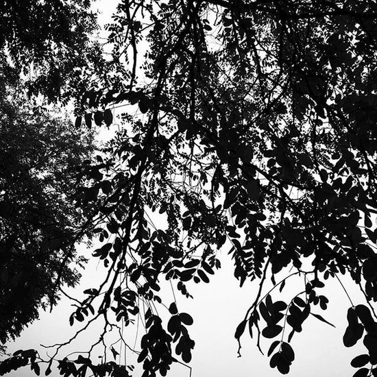 Blackandwhite Bnw Bnw_society Monochrome Bw Monochromatic Instablackandwhite Noiretblanc Instagram Beautiful Bw_lover Skyporn Instagramers Portrait Insta_normandy Nature Love Monotone Irox_bw Lehavre Natureporn Super_france Instagood Fineart_photobw Igers insta_bw art instadaily trees