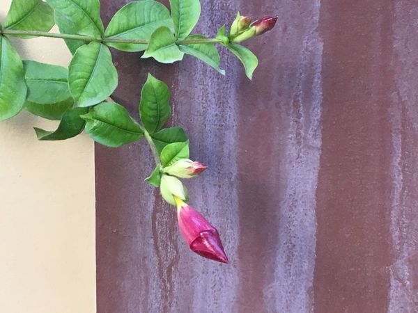 Leaf Plant Growth No People Red Fruit Fragility Flower Close-up Nature Outdoors Day
