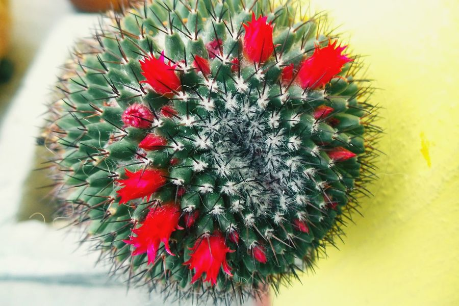 Cactus Cactus Flower Dont Touch.. Amazing