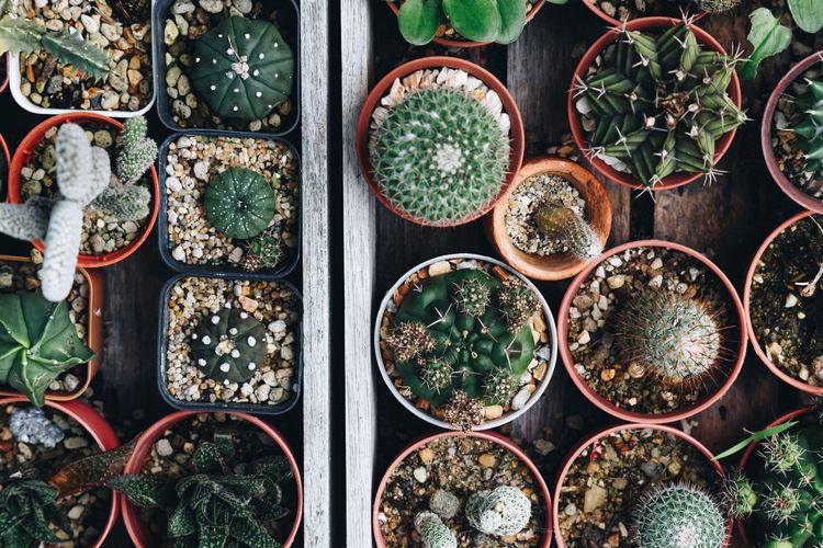 Full frame shot of potted plants