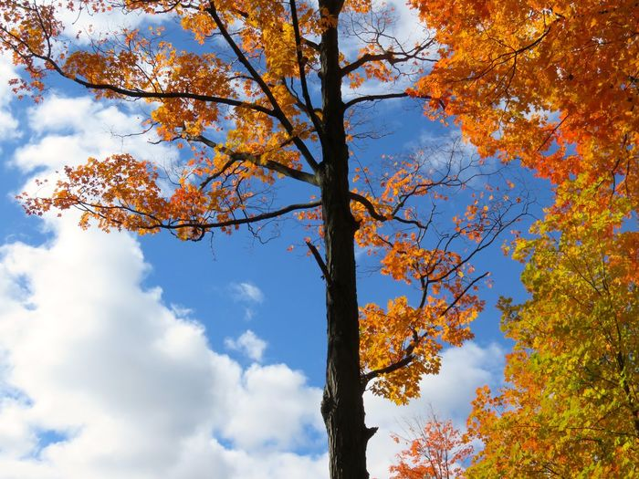 The fall leaves changing , are such stimulating colors , its no wonder I keep taking more photos of them. Fall Beauty Autumn In New England Clouds & Sky Stimulating My Mind