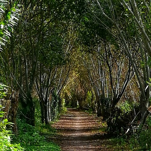 Willow road!! Somerset Levels Uk Trees Willow Tree Road Path Nature's Architecture Arch