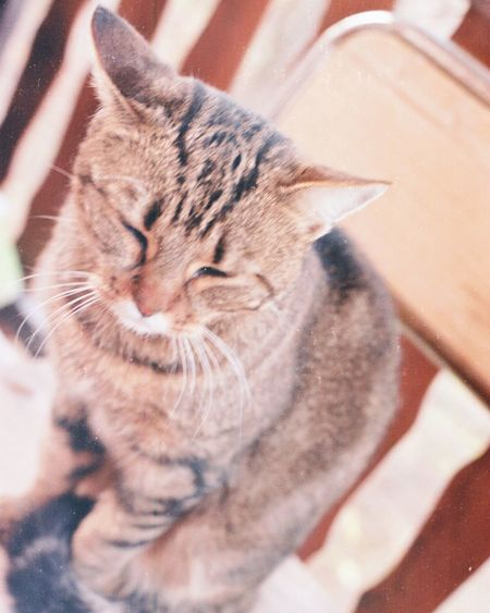 Nofilter Cat Cat Lovers Cat Photography Analog Analogue Photography Analog Photography Analog Camera Analoglove Analogphoto Film Photography Filmisnotdead
