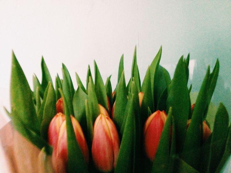 8March восьмоемарта цветы Flowers Tulips Тюльпаны