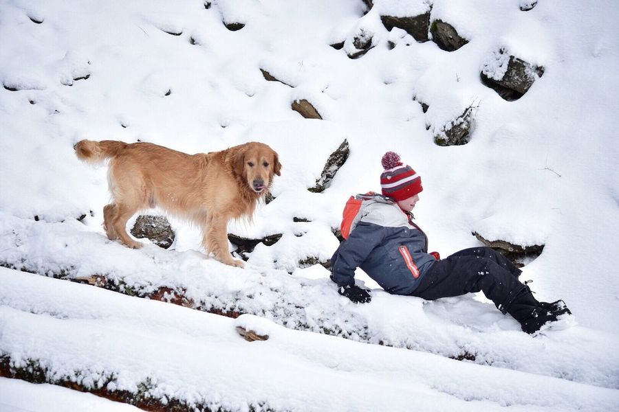 Winter Snow Animal Themes Cold Temperature Mammal Animal Wildlife One Animal Playing Animals In The Wild Dog Pets Outdoors Nature Day Beauty In Nature No People Pet Photography  Dogs Of EyeEm Snow Covered Snow ❄ Outside Photography Logs Tree Winter Golden Retriever