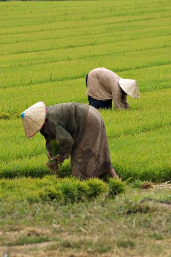 Farmers Working In Farm