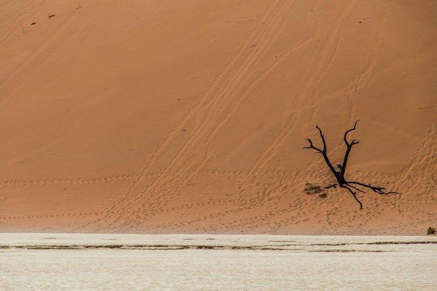 ... Alone ... Namibia 08•2016 Arid Climate Sand Nature Desert Sand Dune Landscape Wanderlust Travel Photography Eyemphotography Travel Destinations Travel Globetrotter EyeEmNewHere Waphaphotographer Wonderful Namibia Deadvlei Africa Silence Liveforadventure Livefortravel