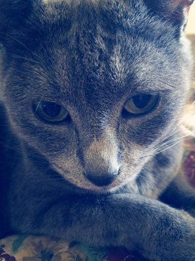 My Cat Gray