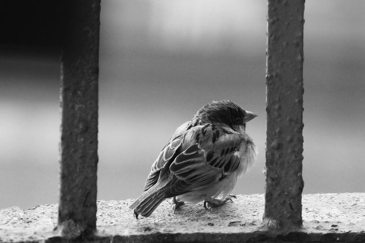 A lonely Bird looking for new friends. Balck And White Bird Birds Birds Of EyeEm  Birds_collection Birds🐦⛅ Black & White Black And White Blackandwhite Blackandwhite Photography City City Life Cityscapes Close-up Mumbai Nature Nature Nature On Your Doorstep Nature Photography Nature_collection Naturelovers Naturephotography One Animal Outdoors Vintage