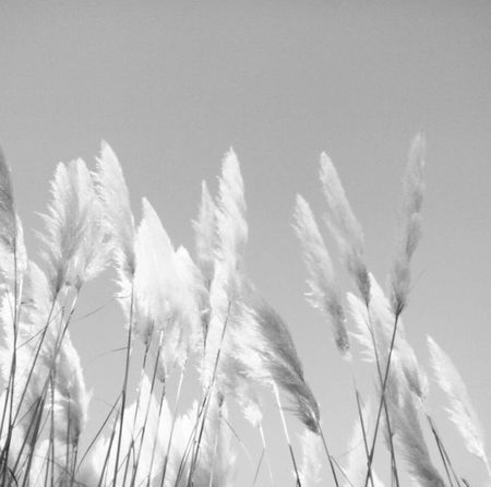 Nature Plant No People Beauty In Nature Sky Photoshooting Photography чбфото Photoshoot Blackandwhite чбфотография Black & White Monochrome черно-белое Minimalist Photography  Minimalistic Minimalmood Growth Minimal Minimalism Outdoors Day Landscape Place Of Heart Breathing Space