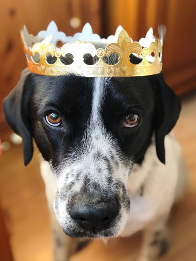 Salute the king Dogs Of EyeEm Dogs Domestic Animals One Animal Portrait Animal Head  Looking At Camera Animal Pets