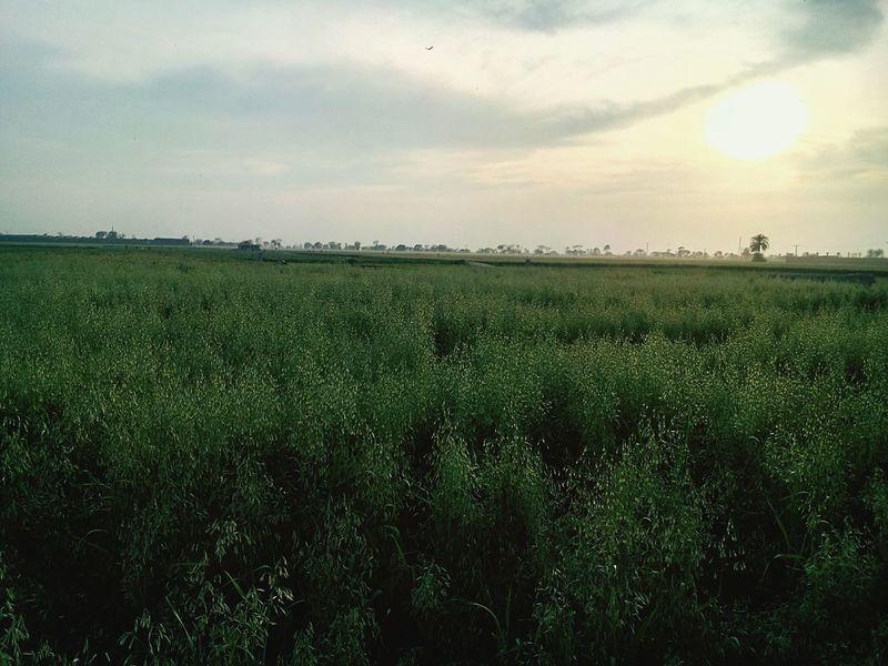 Hello World Urban 4 Filter Green Pakistan In Pakistan Beauty Of Pakistan OpenEdit