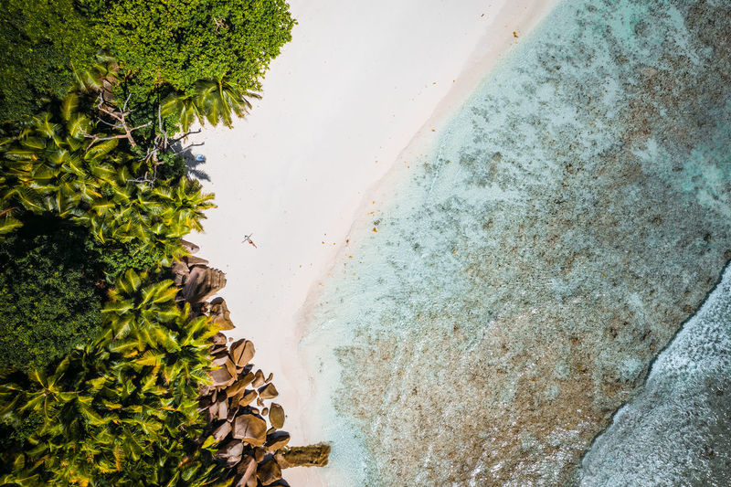 Aerial view of trees growing at beach
