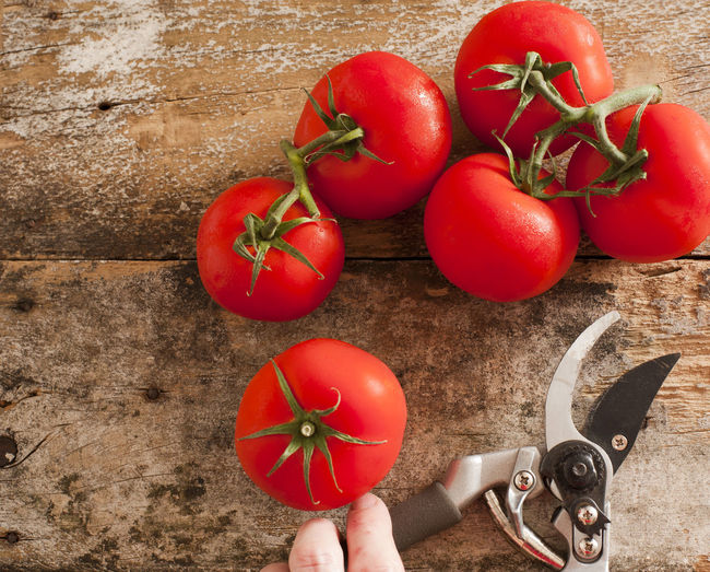High angle view of pruning shears and tomatoes on table