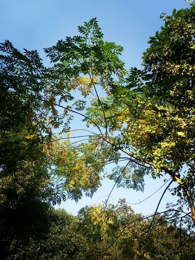 Tree Nature Outdoors Beauty In Nature Growth Beauty In Nature Sky Low Angle View