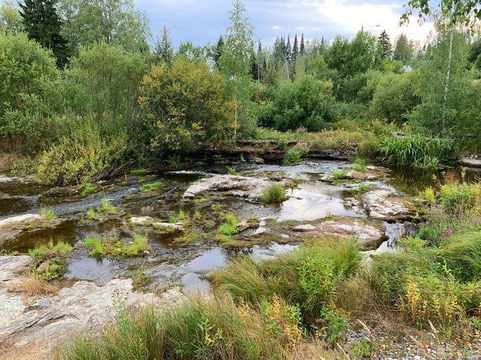 Dry river Plant