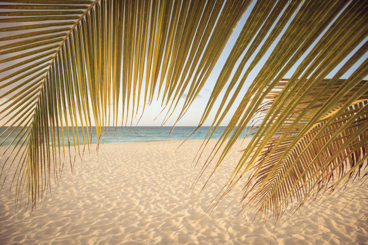 Beach Beauty In Nature Holiday Horizon Horizon Over Water Land Marram Grass Nature No People Outdoors Palm Leaf Palm Tree Sand Scenics - Nature Sea Sky Tranquil Scene Tranquility Trip Tropical Climate Water