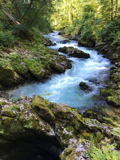 River Water Forest Hiking Outdoors