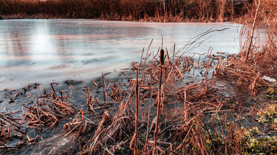 Frozen pond in winter sunlight Last Light Of Day Ice Winter Frozen Frozen Pond Reeds, Weeds, Marshland, Marsh, Wales UK Low Sun Countryside Rural Scene Frost Golden Hour Wales British Light And Shadow Water Full Frame Backgrounds Close-up Shore Sunset Calm Cold Temperature Frozen Lake Cold Weather Condition