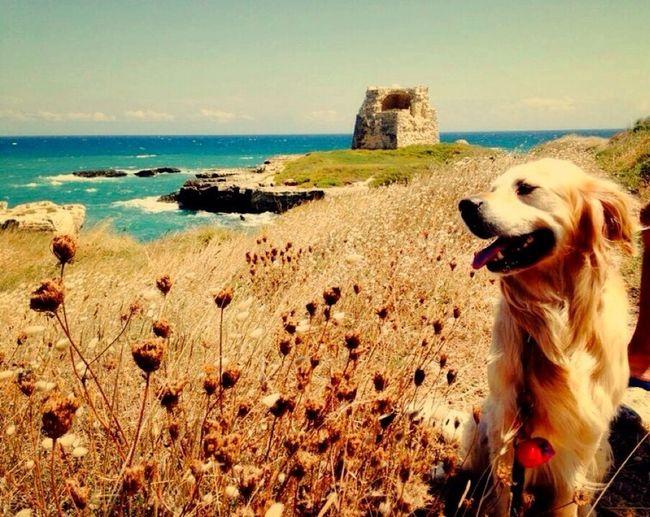 Stop and stare / Sea Dogs Suchadoggie
